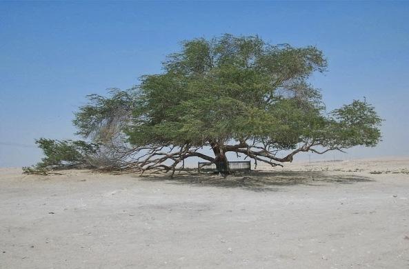 tree-of-life-6[6]