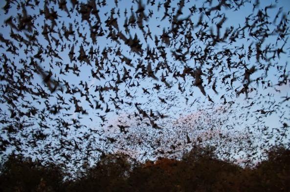 bracken-bat-cave-11[6]